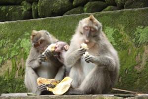 Von Affen und Tänzern